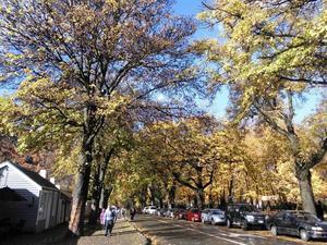 隣町アロータウン: 秋の黄金色の木々が美しい